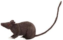 Decoratie Rat 24cm