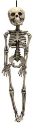 Decoratie Skelet 30cm