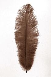 Struisvogelveren ca. 30cm Bruin