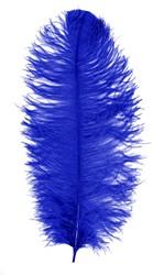 Prinsenveer Blauw 60-70cm (Struisvogelveer)
