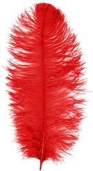 Prinsenveer Rood 60-70cm (Struisvogelveer)