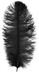 Prinsenveer Zwart 60-70cm (Struisvogelveer)