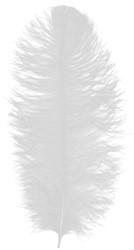 Prinsenveer Wit 60-70cm (Struisvogelveer)